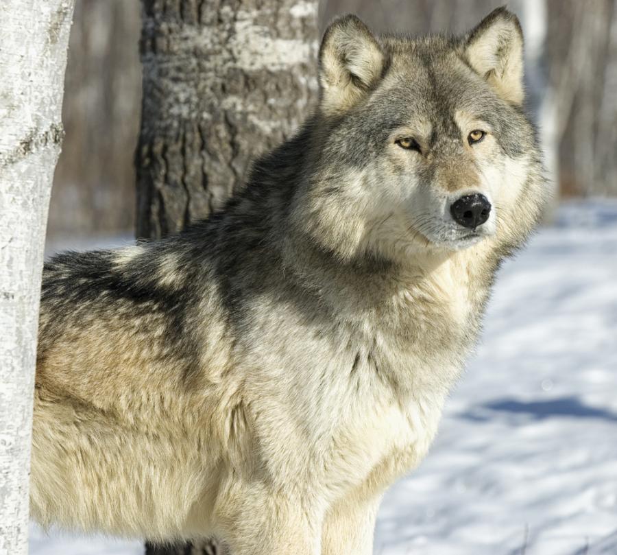 Images about zwierzęta leśne on pinterest