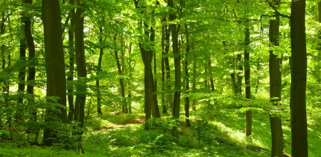 W 2011 roku zasoby drzewne zwiększyły się o blisko 21 mln m sześc.