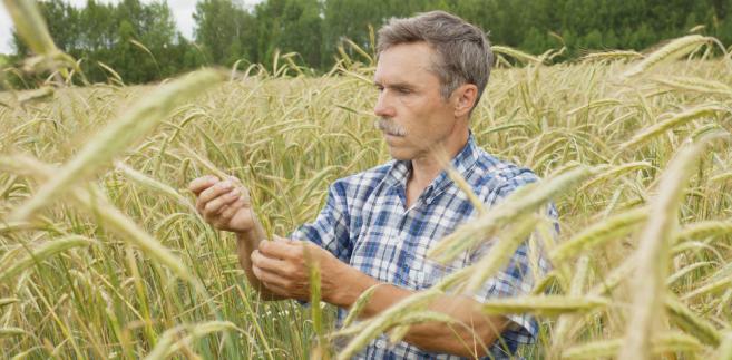 O 14 proc. do ok. 23,4 tys. wzrosła w 2011 r. liczba gospodarstw ekologicznych w Polsce.