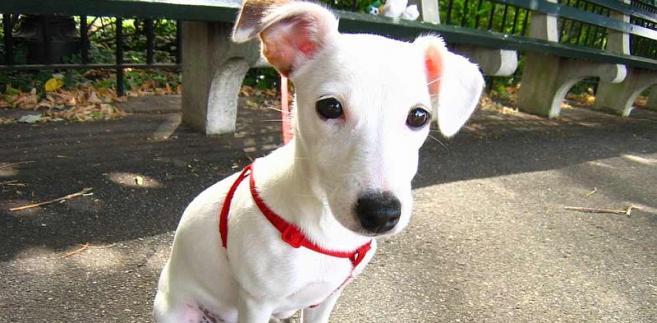 Tryb i zasady ustanawiania opłat w spółdzielni zapisano w jej statucie. Jeśli decyzję w sprawie dodatkowych opłat od właścicieli psów podjęło walne zgromadzenie członków spółdzielni, to jest ona z całą pewnością wiążąca.