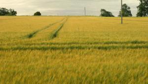 Sprawa dotyczyła małżonków, którzy mieli gospodarstwo rolne. Przez ich tereny przechodziły linie wysokiego napięcia.