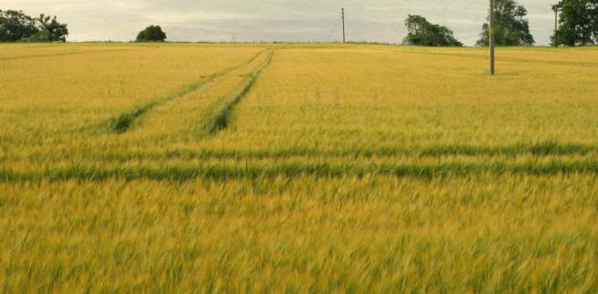 Ustawodawca chce mianowicie uniemożliwić przeniesienie nieruchomości rolnej lub jej części w przypadku, gdyby w efekcie podziału gospodarstwa powierzchnia użytków rolnych pozostała przy zbywcy była mniejsza od normy, którą – dla poszczególnych województw – ustali minister rolnictwa i rozwoju wsi