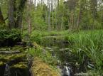Będzie konkurs na dyrektora Białowieskiego Parku Narodowego