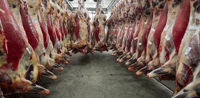 Urząd podał także, że cały czas wyjaśnia z polskimi władzami wcześniej przekazane przeze nie informacje, że do Finlandii miało dotrzeć około ćwierć tony podejrzanego mięsa.
