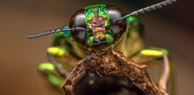 owady, insekty, przyroda