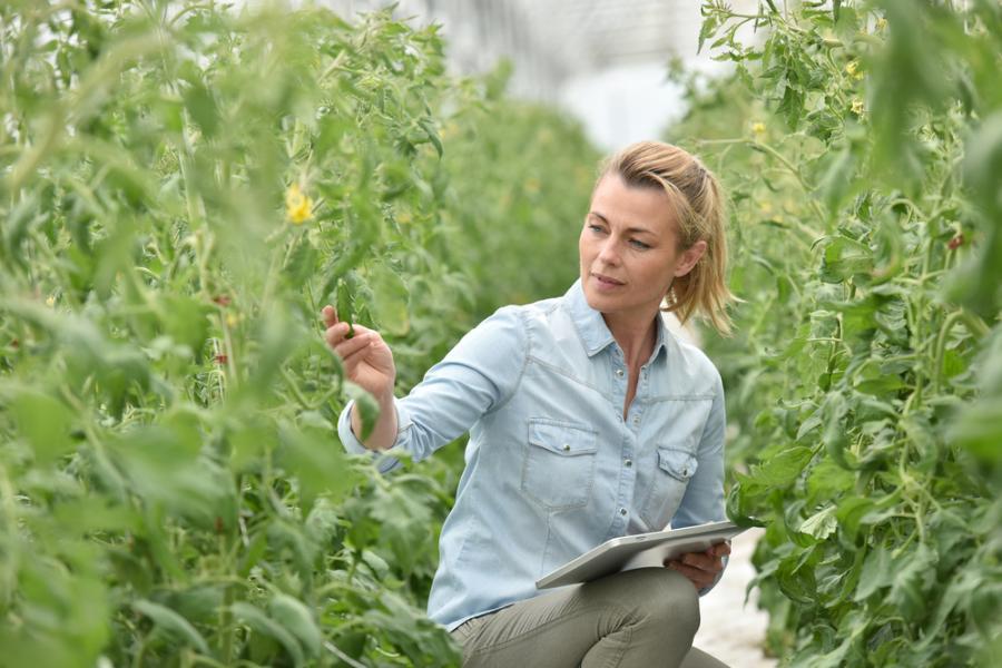 kobieta rolnik