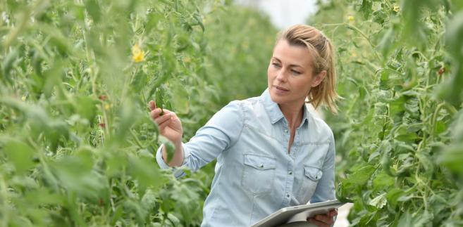 GPW Ventures tworzy rolniczy fundusz z KOWR