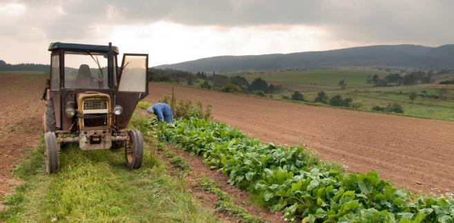 Wojciechowski: Polska może sięgnąć po 3 mld euro, by wesprzeć rolników