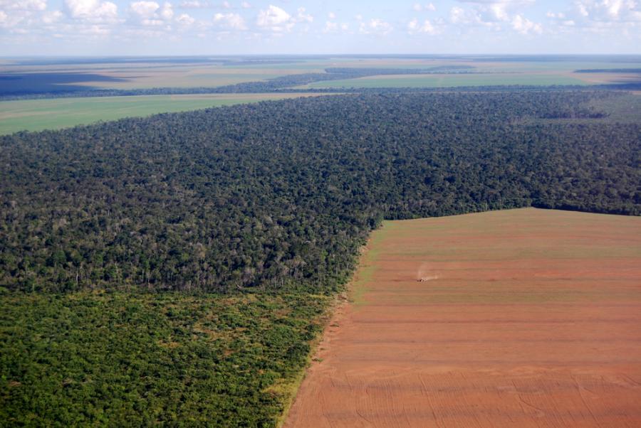 wycinka Lasy Deszczowe Brazylia