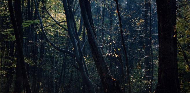 Las miejski w Giżycku do wycięcia. Mieszkańcy walczą z Lasami Państwowymi