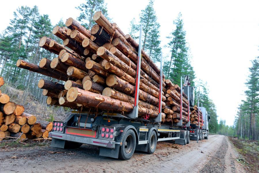 Ciężarówka. Ładunek drewna. Las. Przewożenie drewna