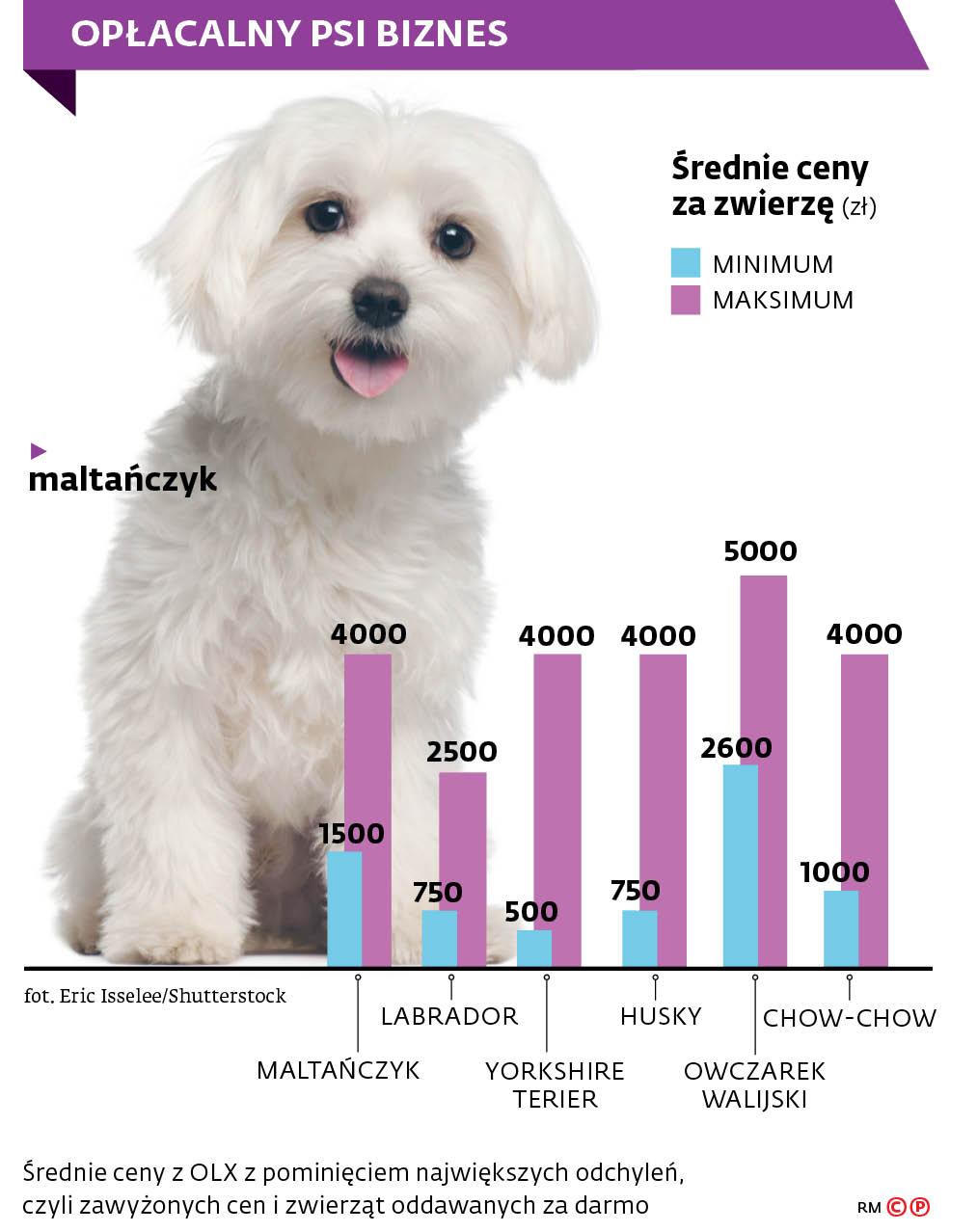 Opłacalny psi biznes