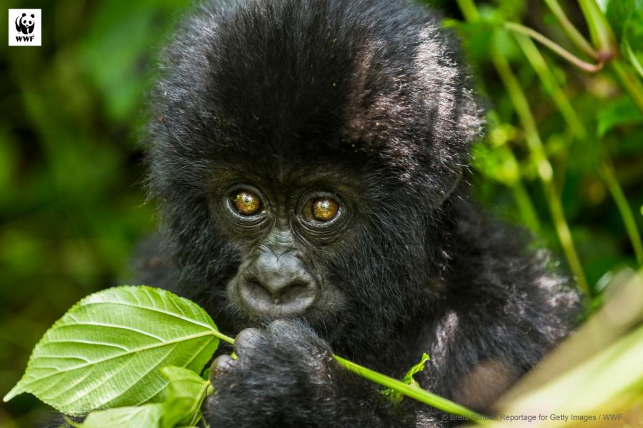 Virunga National Park_WWF