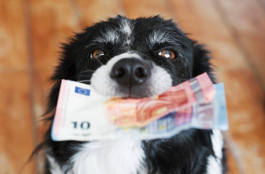 Podatek od psa